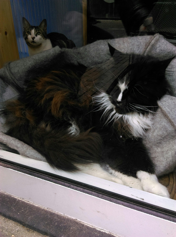 Kittig katje